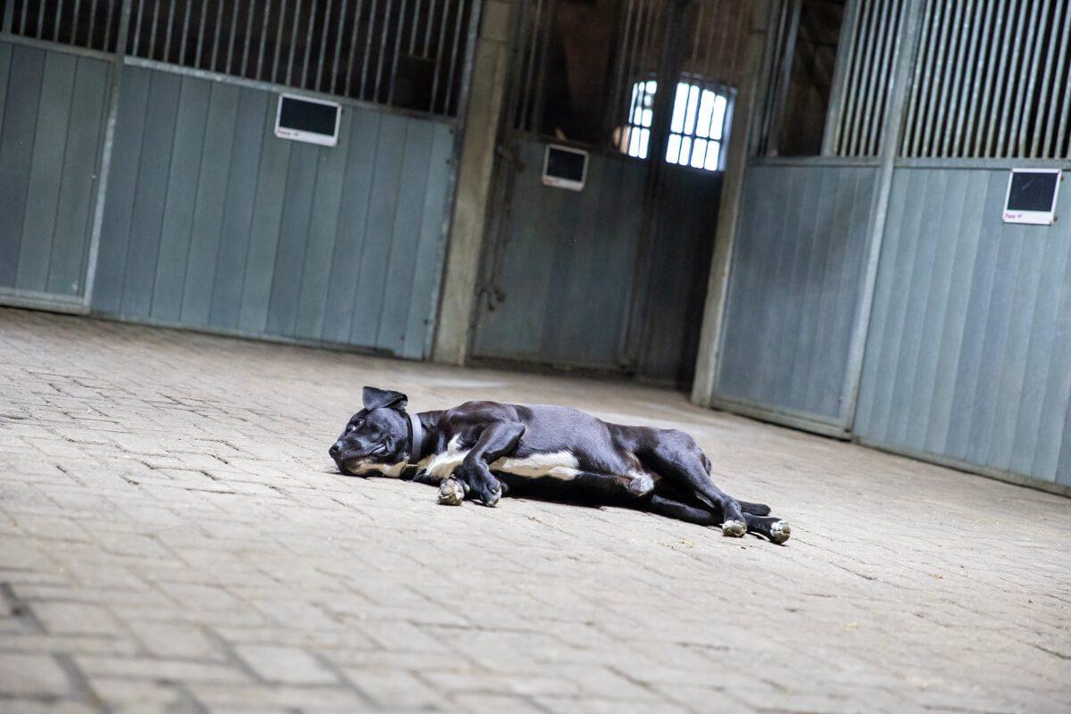 paardenhotel op vakantie met paard brabant alphen 1