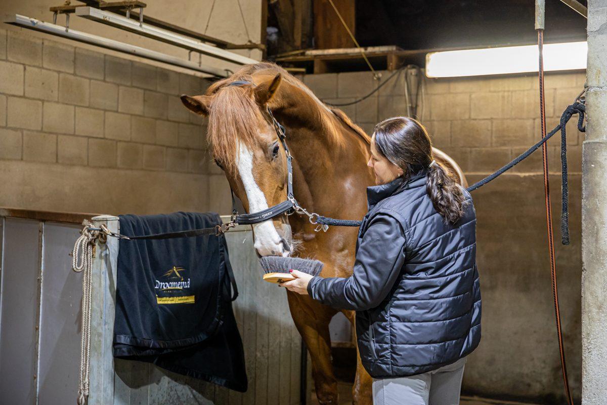 paardenhotel op vakantie met paard brabant alphen 10