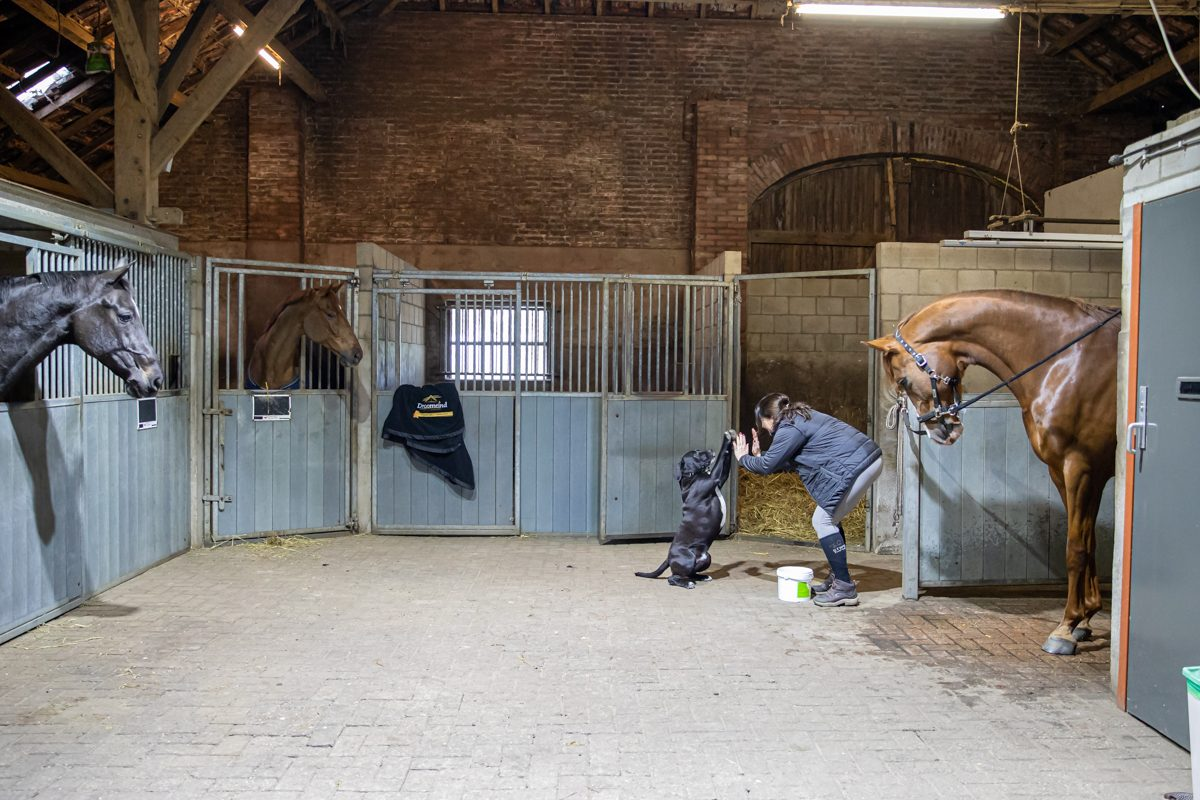 paardenhotel op vakantie met paard brabant alphen 11