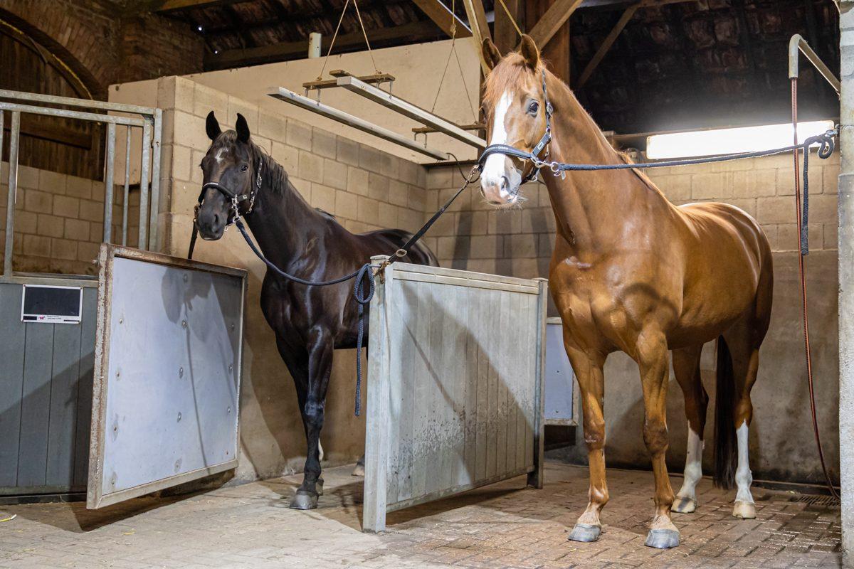 paardenhotel op vakantie met paard brabant alphen 12