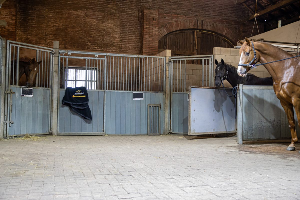 paardenhotel op vakantie met paard brabant alphen 13