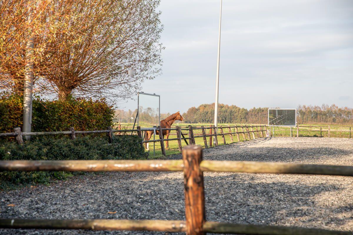 paardenhotel op vakantie met paard brabant alphen 2