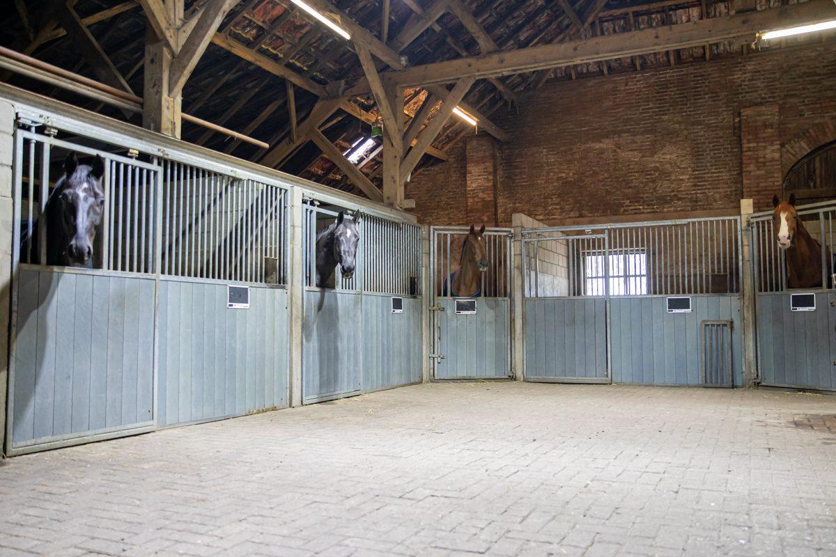 paardenhotel op vakantie met paard brabant alphen 6