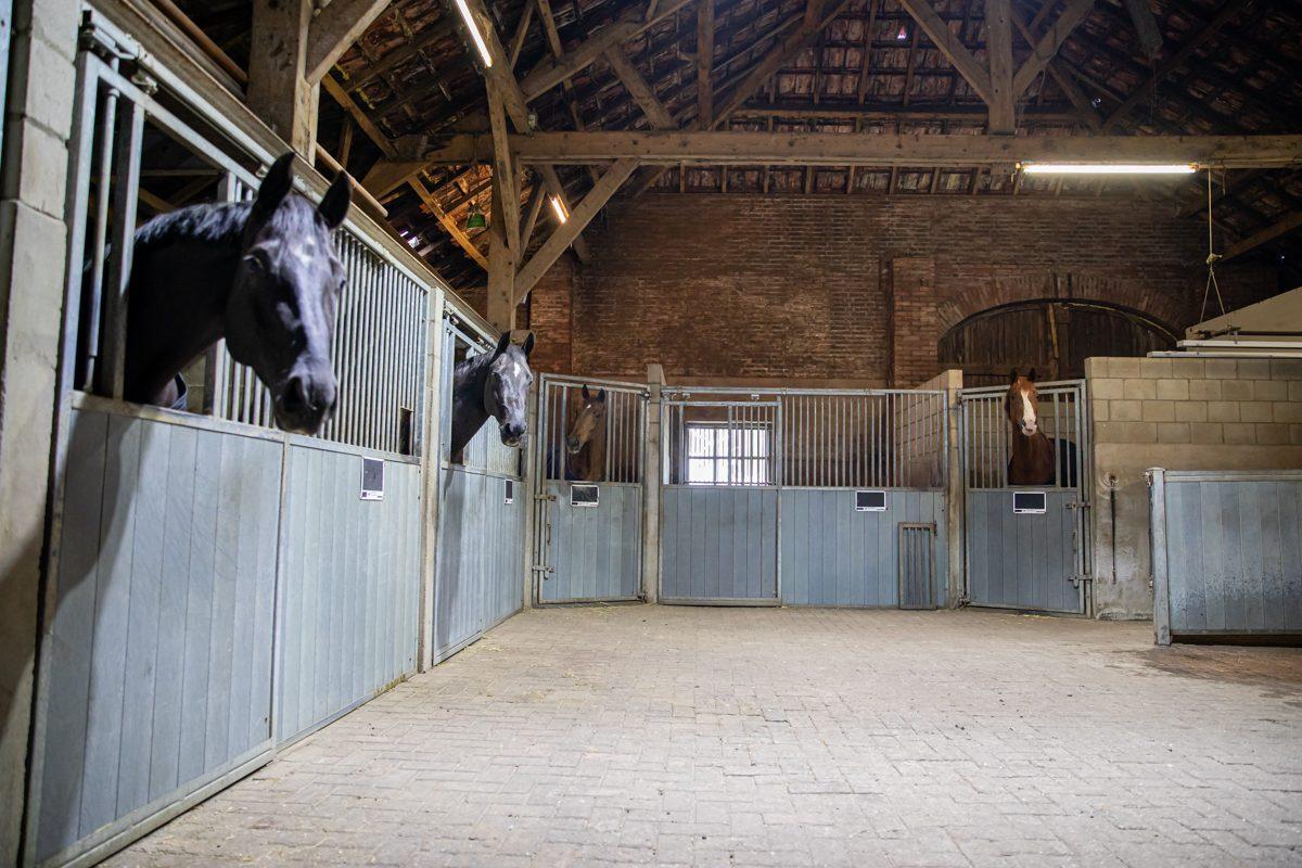 paardenhotel op vakantie met paard brabant alphen 7