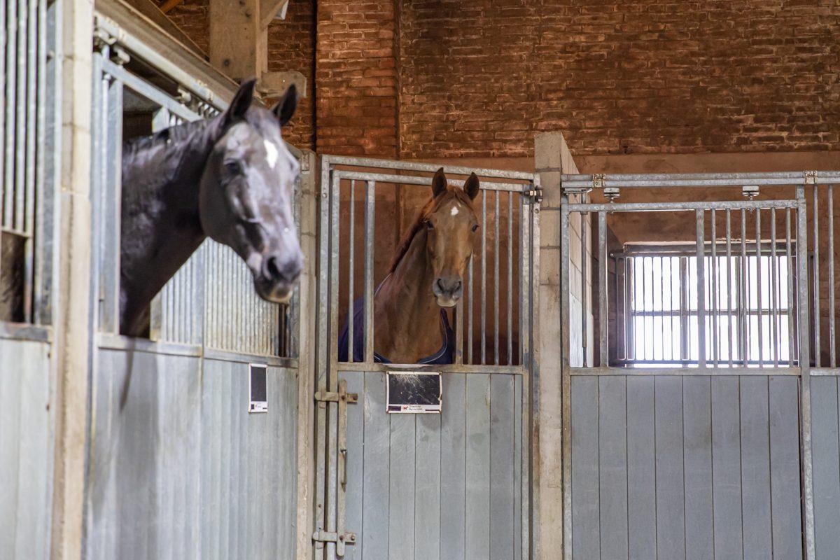paardenhotel op vakantie met paard brabant alphen 8