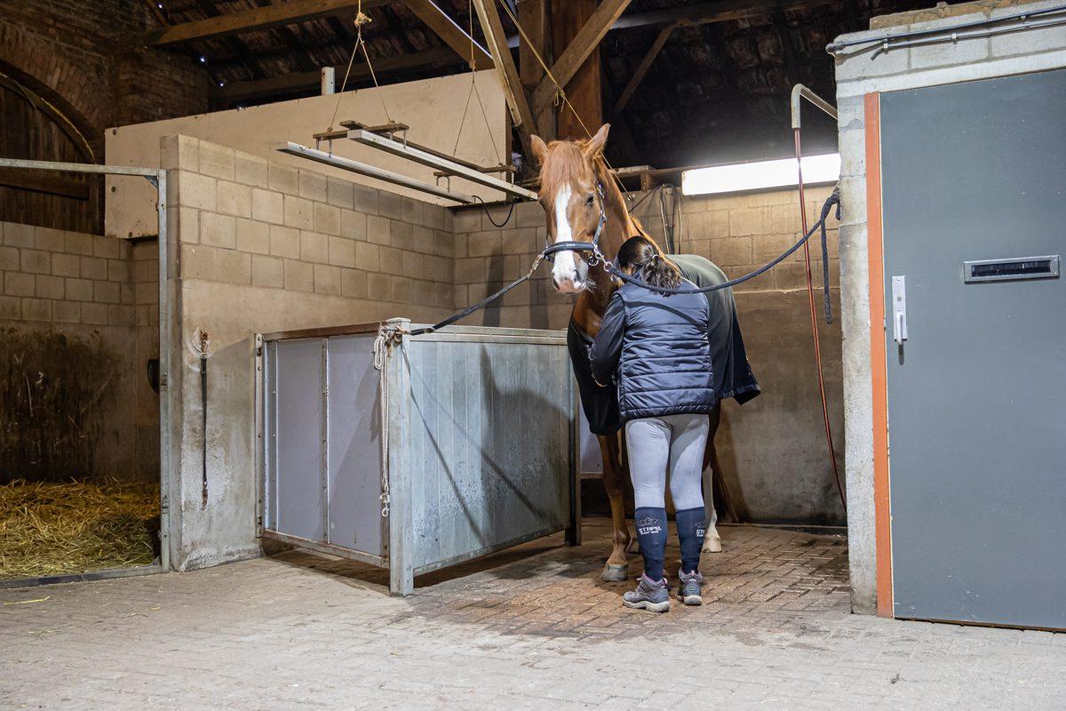 paardenhotel op vakantie met paard brabant alphen 9