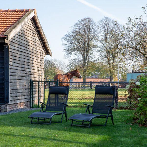 vakantiewoning met paardenhotel alphen brabant villa Bianco 3